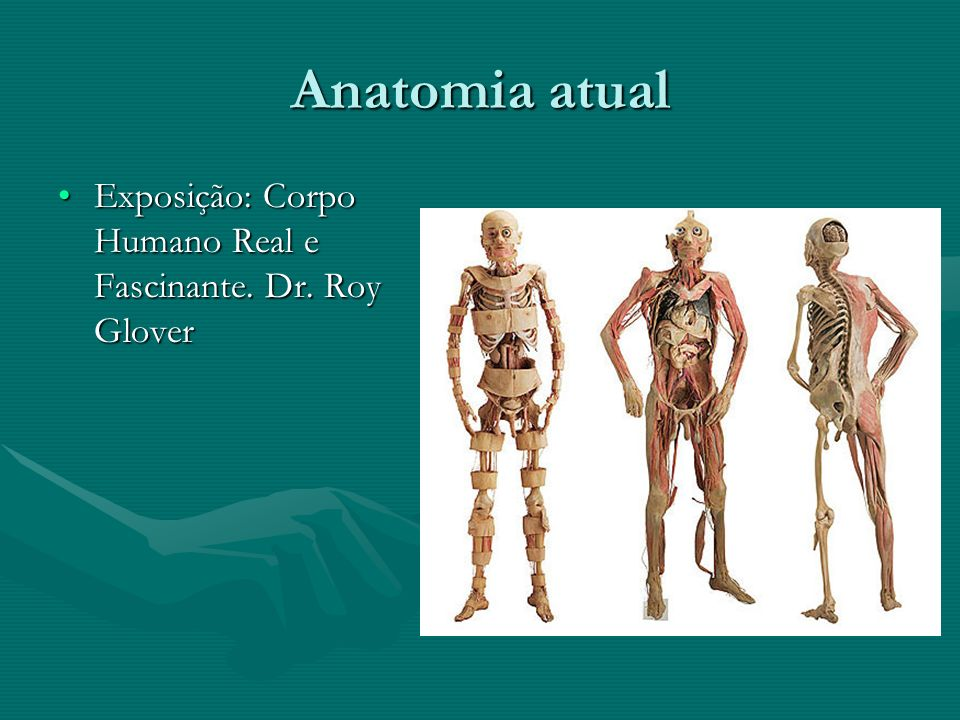 Anatomia atual Exposição: Corpo Humano Real e Fascinante. Dr. Roy Glover