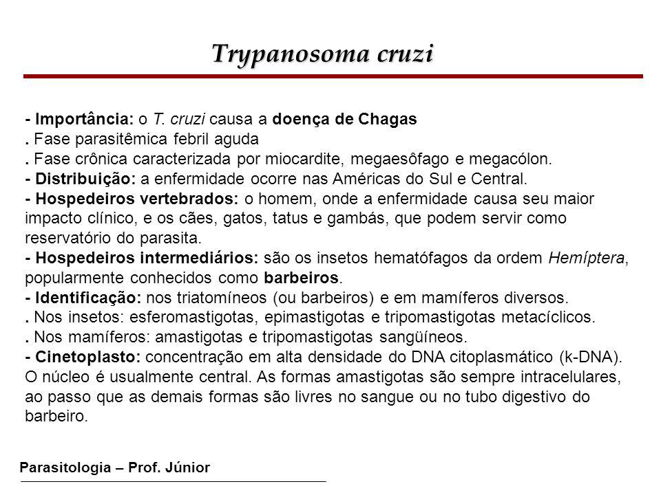 Trypanosoma cruzi - Importância: o T. cruzi causa a doença de Chagas