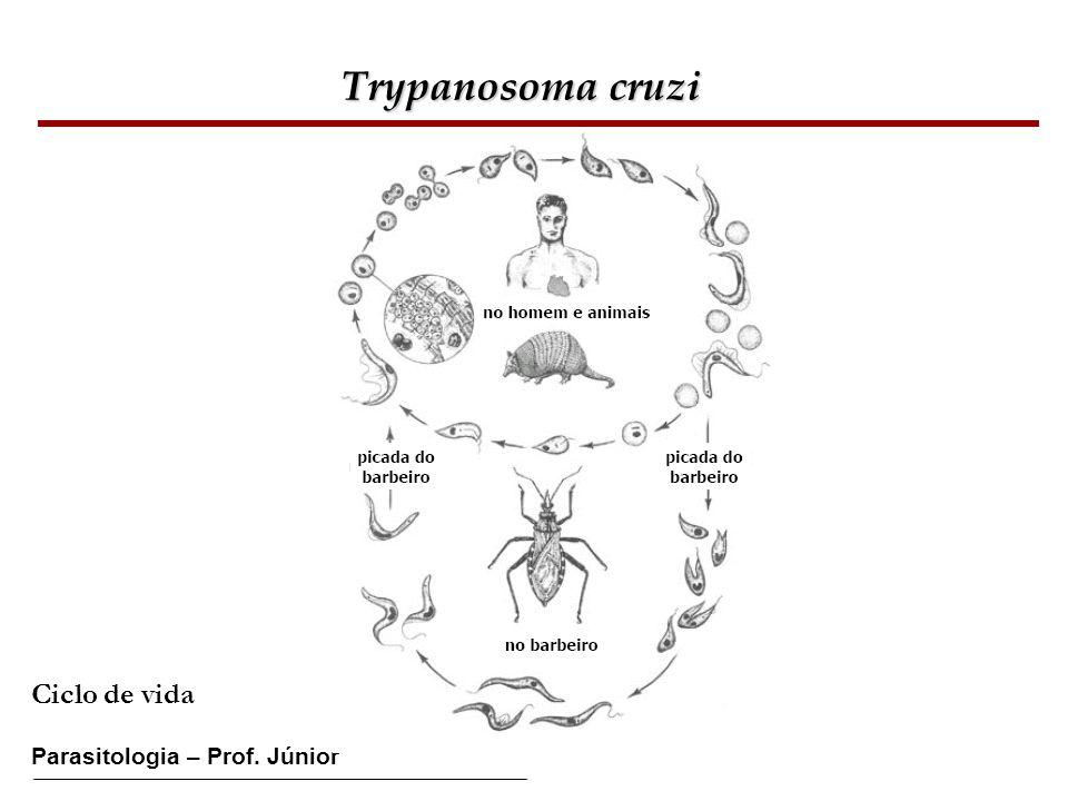 Trypanosoma cruzi Ciclo de vida