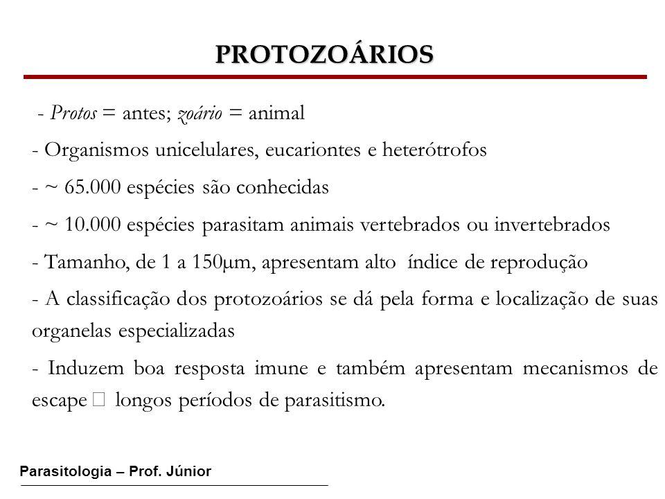 PROTOZOÁRIOS - Protos = antes; zoário = animal