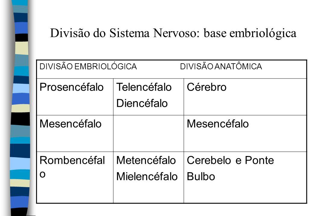 Divisão do Sistema Nervoso: base embriológica