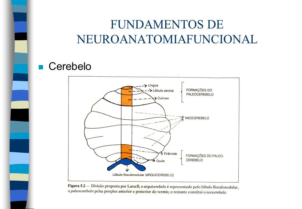 FUNDAMENTOS DE NEUROANATOMIAFUNCIONAL