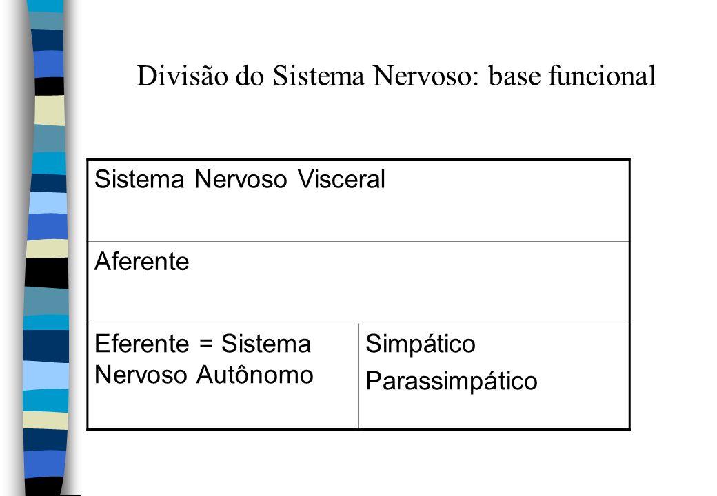 Divisão do Sistema Nervoso: base funcional