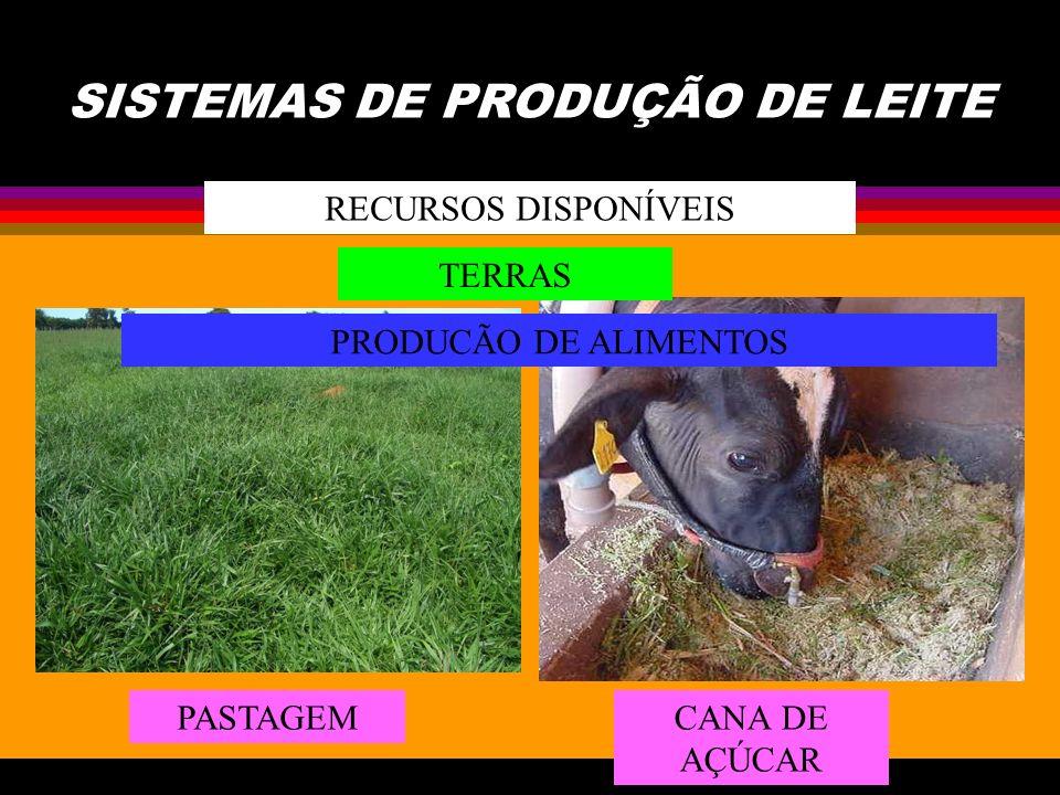 SISTEMAS DE PRODUÇÃO DE LEITE