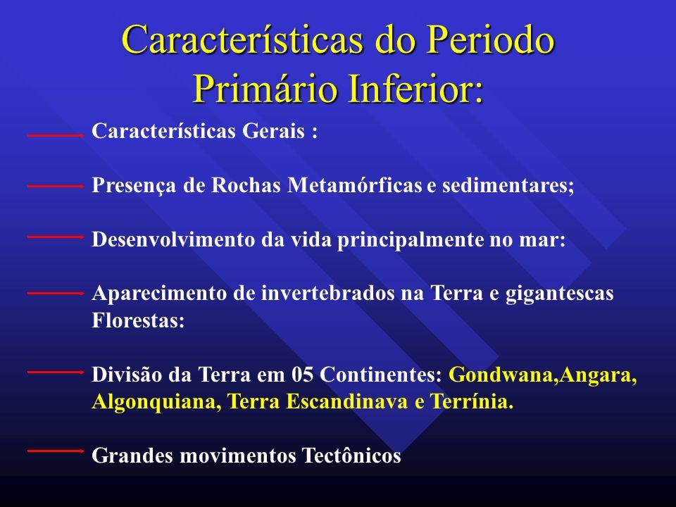 Características do Periodo Primário Inferior: