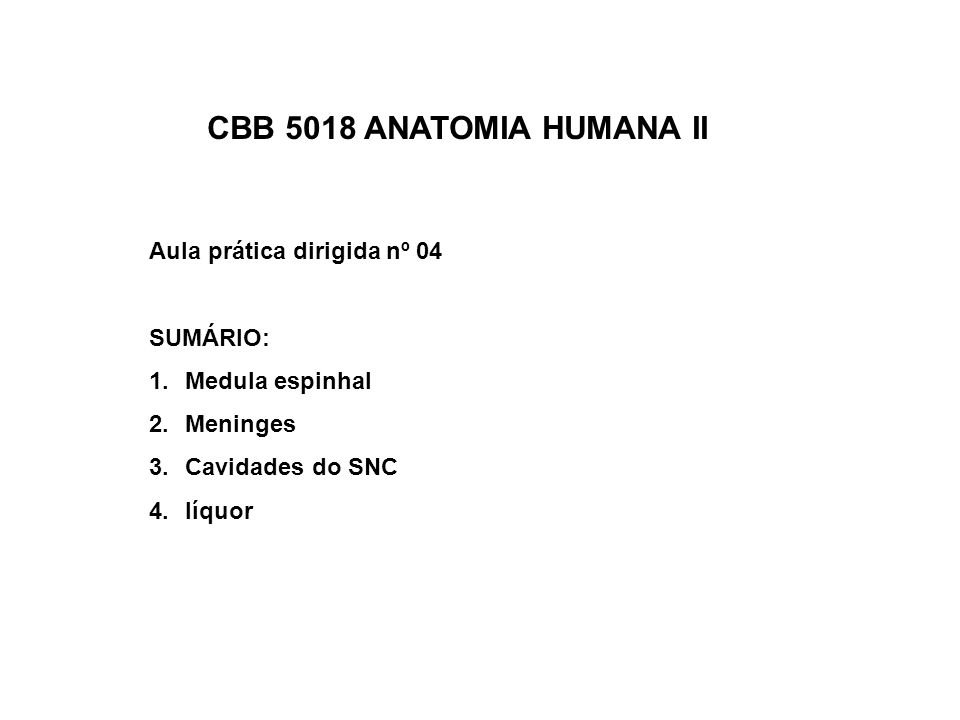 CBB 5018 ANATOMIA HUMANA II Aula prática dirigida nº 04 SUMÁRIO: