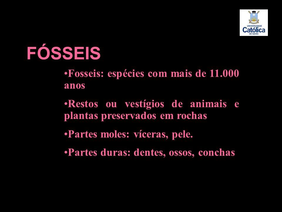 FÓSSEIS Fosseis: espécies com mais de 11.000 anos