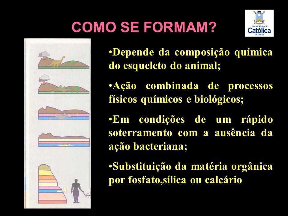 COMO SE FORMAM Depende da composição química do esqueleto do animal;