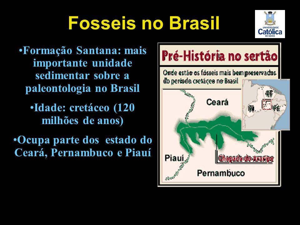 Fosseis no Brasil Formação Santana: mais importante unidade sedimentar sobre a paleontologia no Brasil.