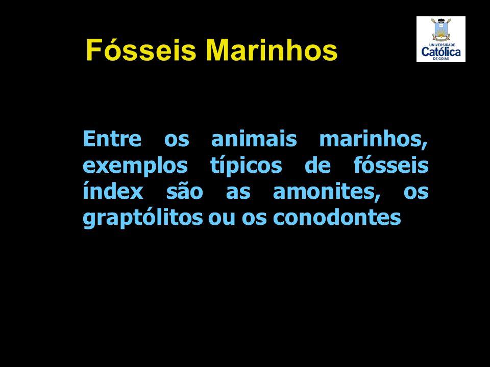 Fósseis Marinhos Entre os animais marinhos, exemplos típicos de fósseis índex são as amonites, os graptólitos ou os conodontes.