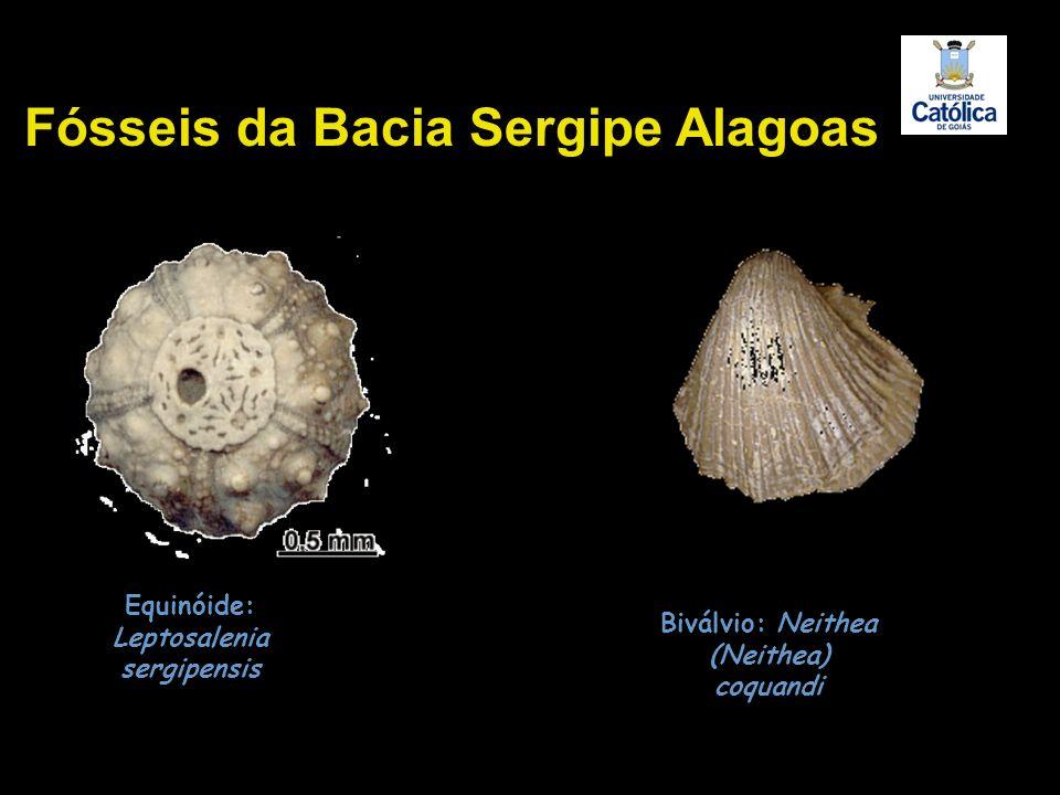 Fósseis da Bacia Sergipe Alagoas