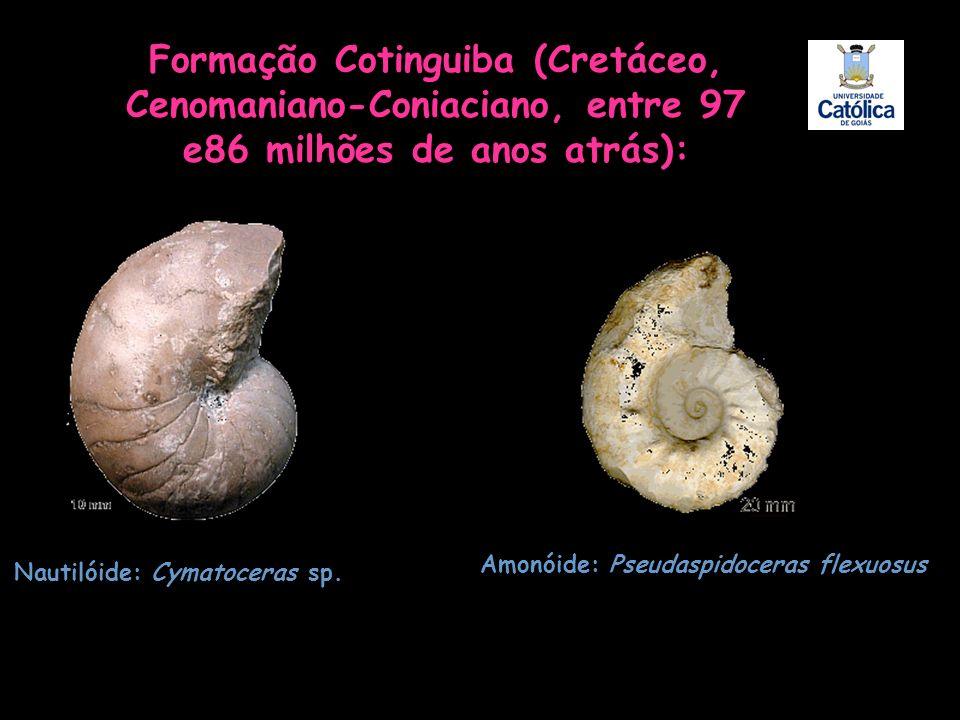 Formação Cotinguiba (Cretáceo, Cenomaniano-Coniaciano, entre 97 e86 milhões de anos atrás):