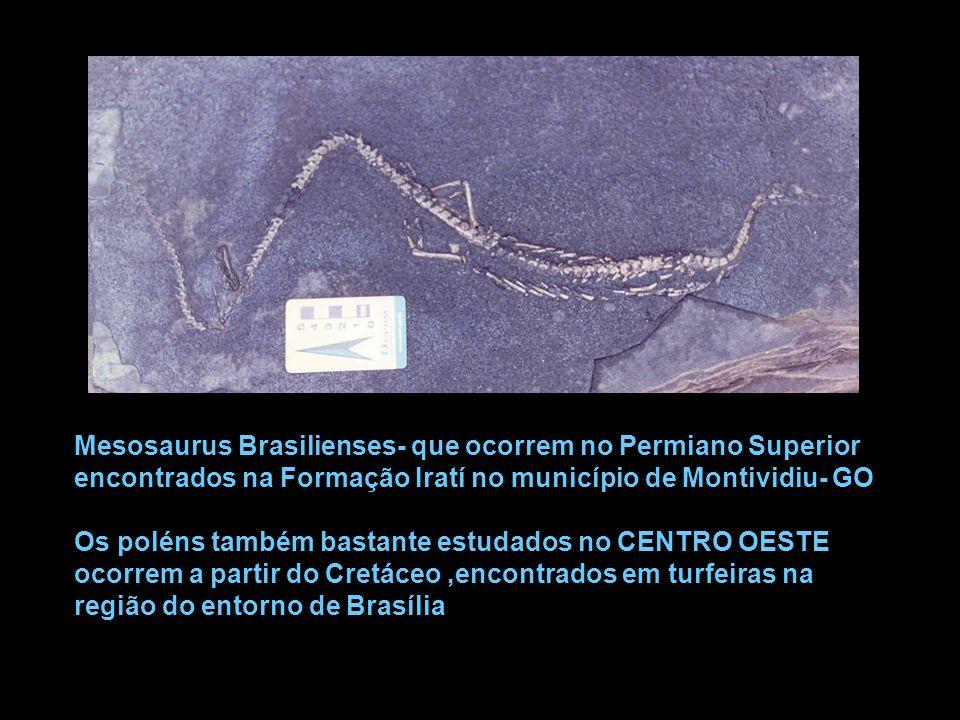 Mesosaurus Brasilienses- que ocorrem no Permiano Superior