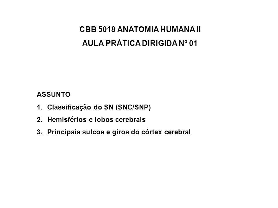 AULA PRÁTICA DIRIGIDA Nº 01