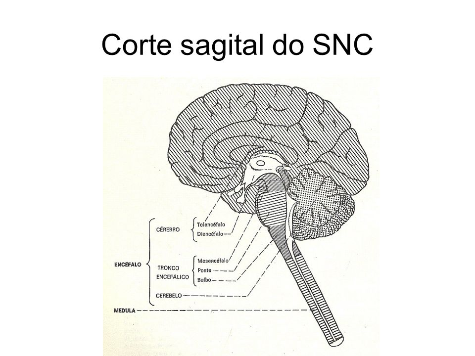Corte sagital do SNC