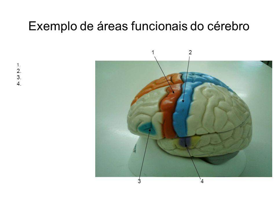 Exemplo de áreas funcionais do cérebro