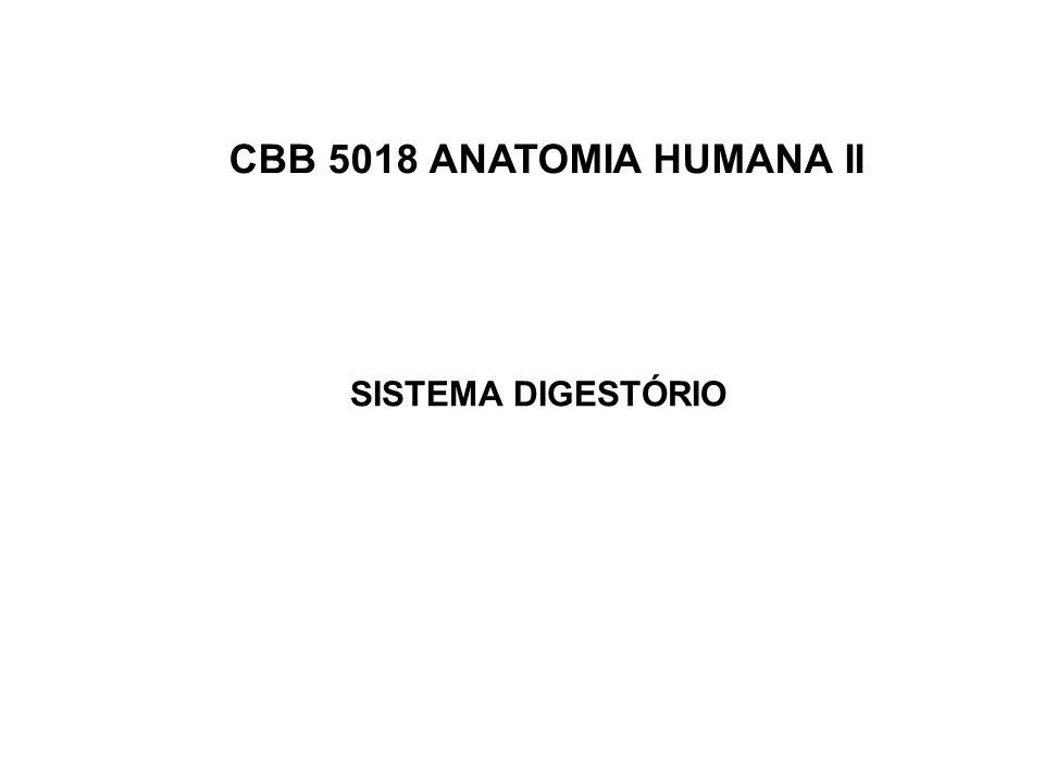 CBB 5018 ANATOMIA HUMANA II SISTEMA DIGESTÓRIO