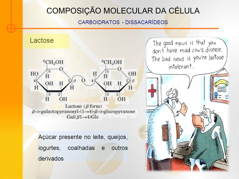 COMPOSIÇÃO MOLECULAR DA CÉLULA CARBOIDRATOS - DISSACARÍDEOS