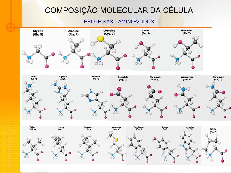 COMPOSIÇÃO MOLECULAR DA CÉLULA PROTEÍNAS - AMINOÁCIDOS