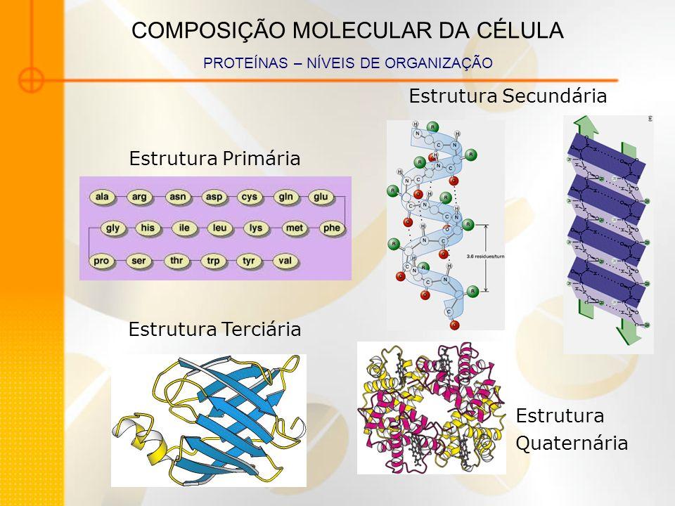COMPOSIÇÃO MOLECULAR DA CÉLULA PROTEÍNAS – NÍVEIS DE ORGANIZAÇÃO