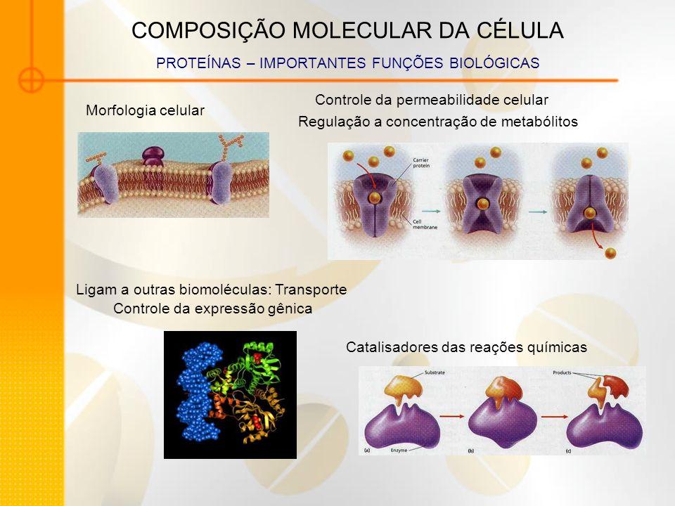 COMPOSIÇÃO MOLECULAR DA CÉLULA PROTEÍNAS – IMPORTANTES FUNÇÕES BIOLÓGICAS