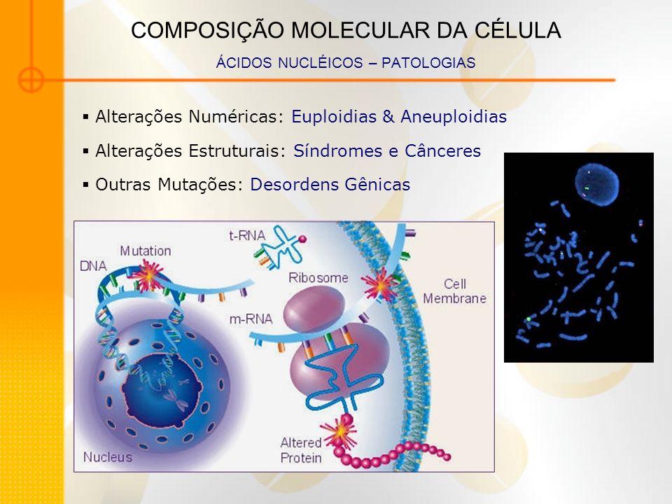 COMPOSIÇÃO MOLECULAR DA CÉLULA ÁCIDOS NUCLÉICOS – PATOLOGIAS