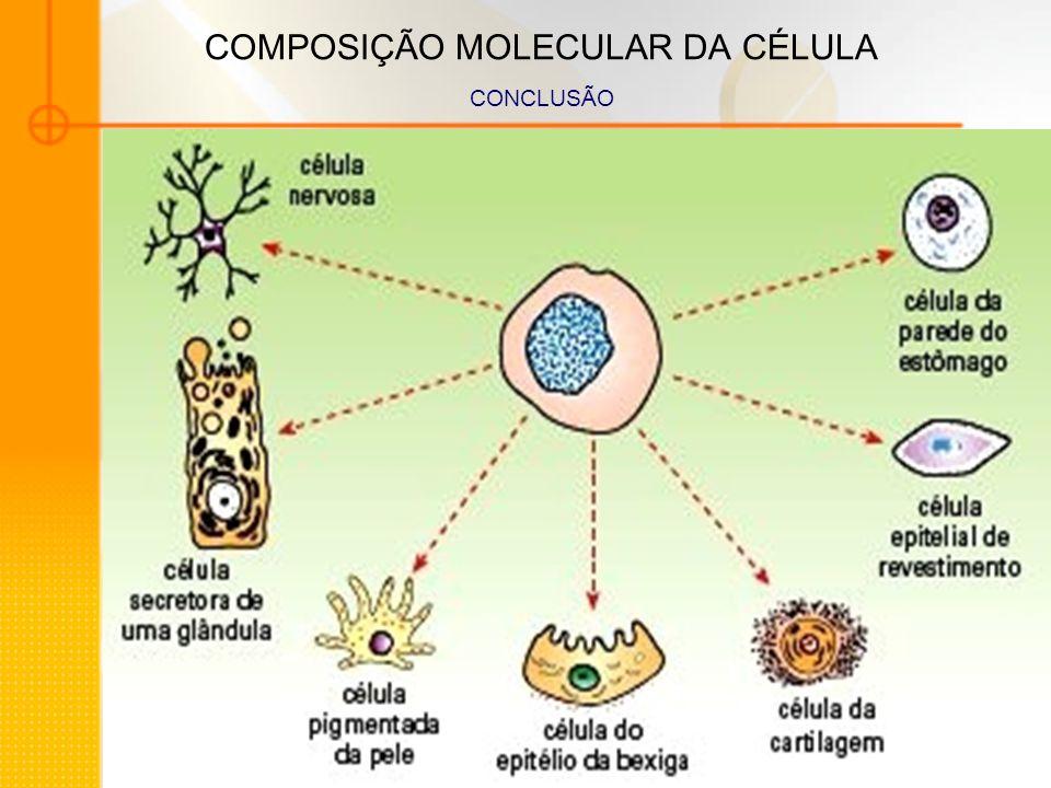 COMPOSIÇÃO MOLECULAR DA CÉLULA CONCLUSÃO
