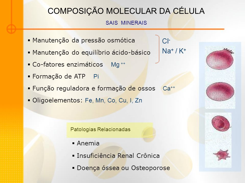 COMPOSIÇÃO MOLECULAR DA CÉLULA SAIS MINERAIS