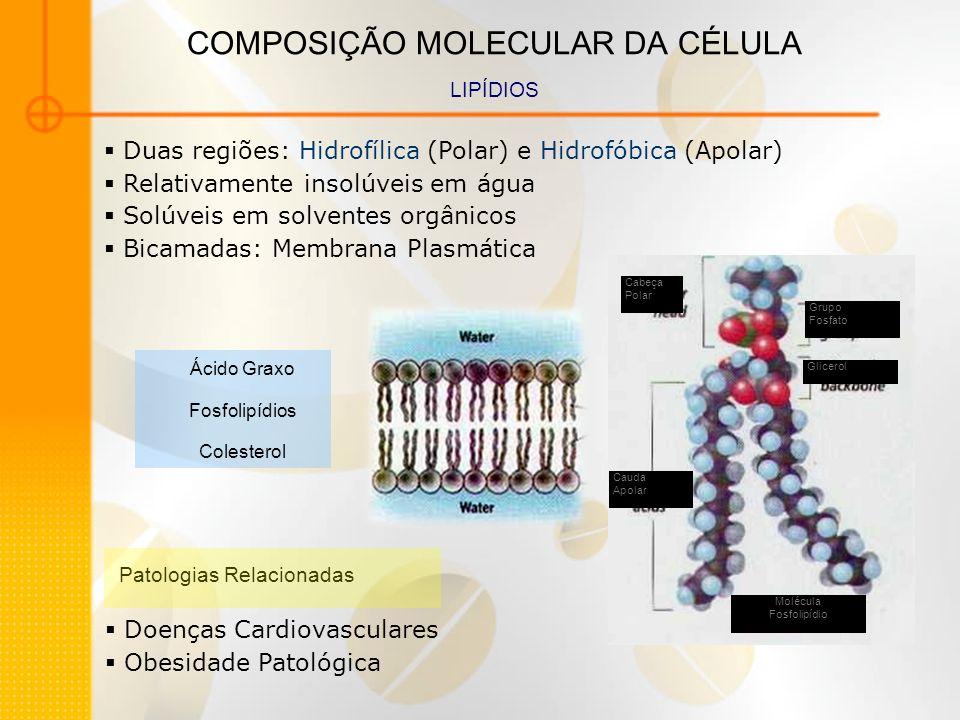 COMPOSIÇÃO MOLECULAR DA CÉLULA LIPÍDIOS