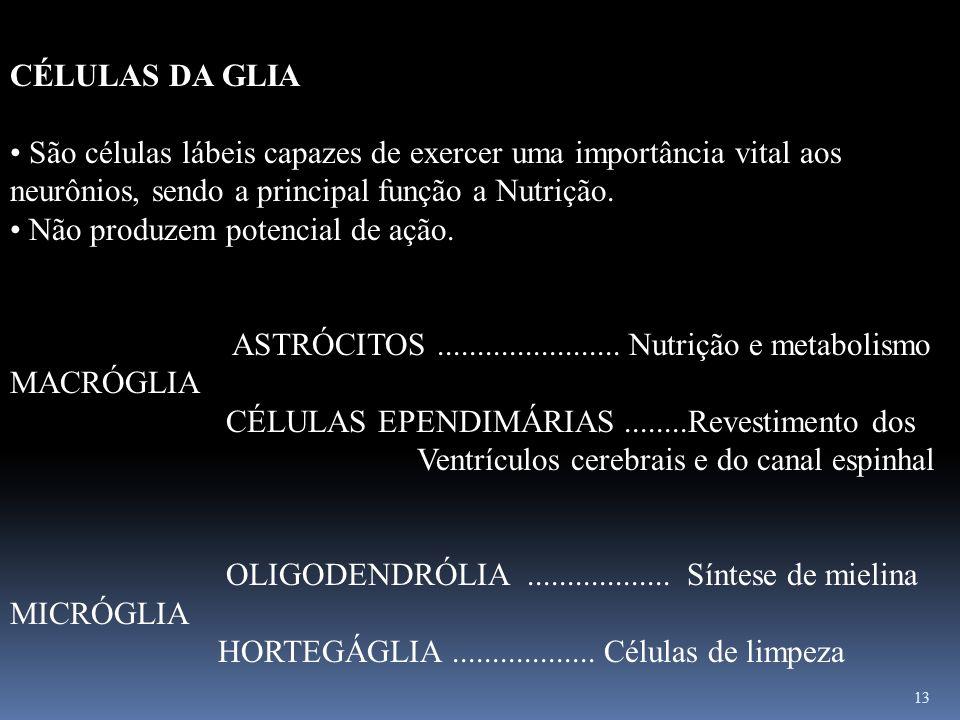 CÉLULAS DA GLIA São células lábeis capazes de exercer uma importância vital aos neurônios, sendo a principal função a Nutrição.