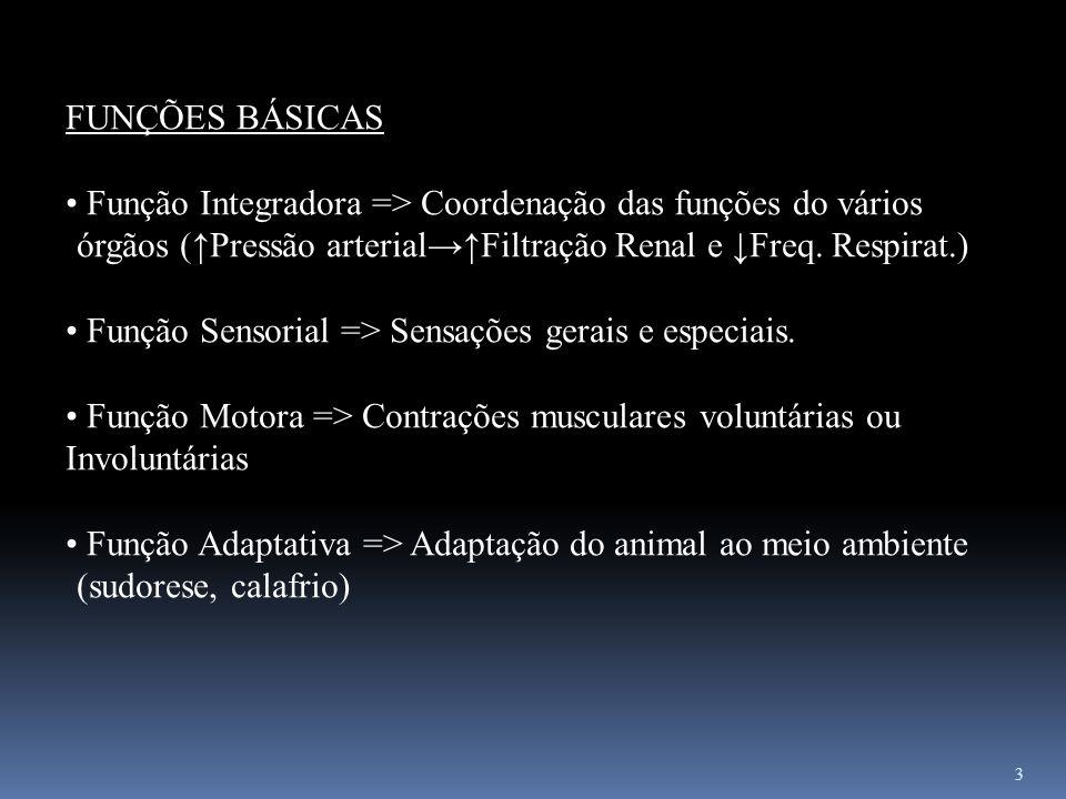 FUNÇÕES BÁSICAS Função Integradora => Coordenação das funções do vários órgãos (↑Pressão arterial→↑Filtração Renal e ↓Freq. Respirat.)