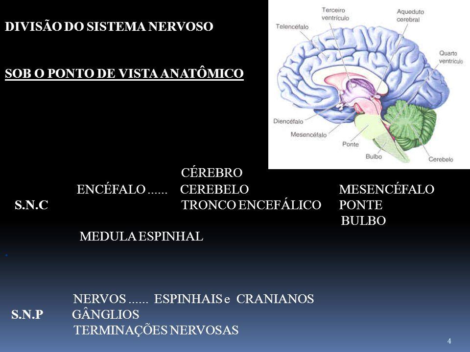 CÉREBRO DIVISÃO DO SISTEMA NERVOSO SOB O PONTO DE VISTA ANATÔMICO
