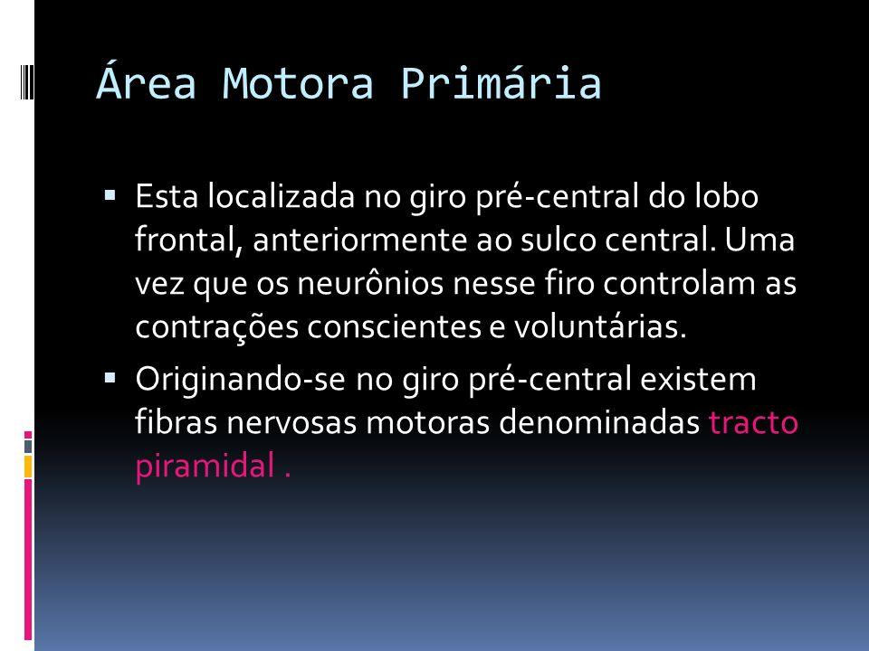 Área Motora Primária