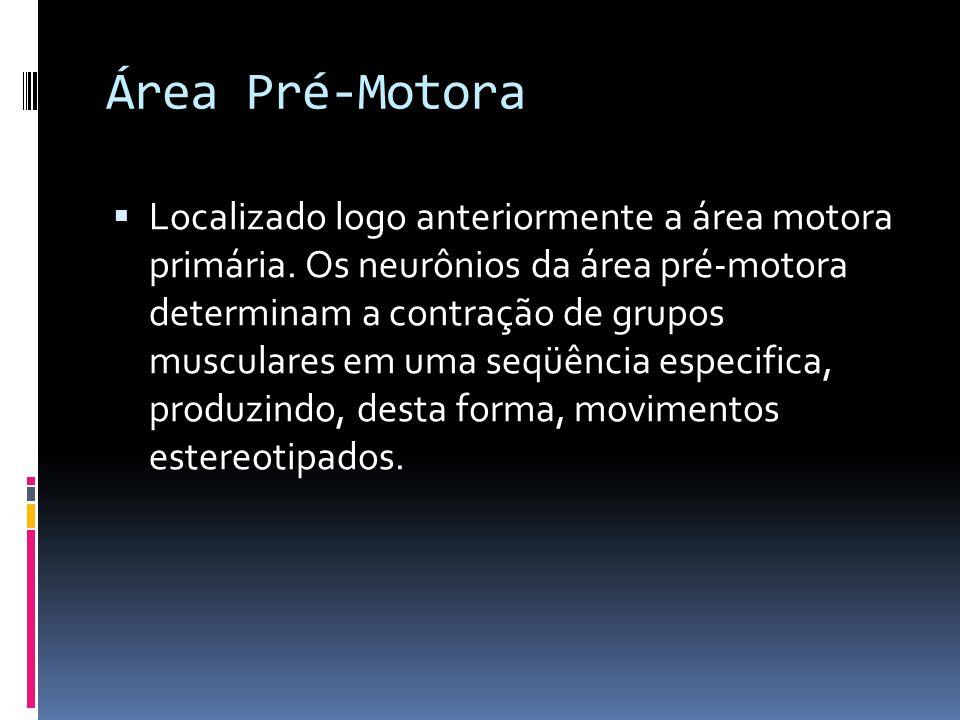 Área Pré-Motora