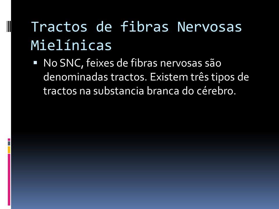 Tractos de fibras Nervosas Mielínicas