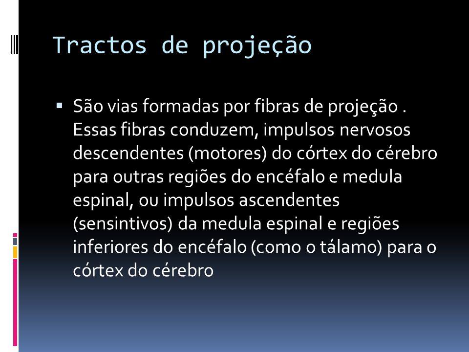 Tractos de projeção