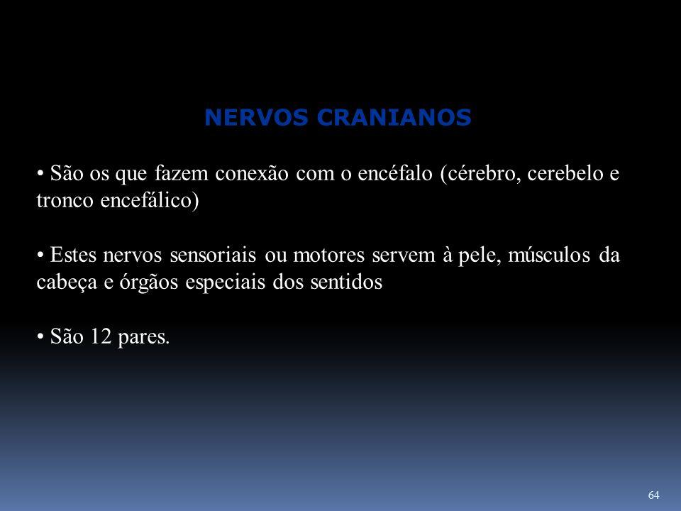 NERVOS CRANIANOS São os que fazem conexão com o encéfalo (cérebro, cerebelo e tronco encefálico)