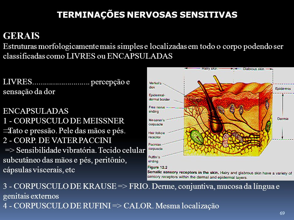 TERMINAÇÕES NERVOSAS SENSITIVAS