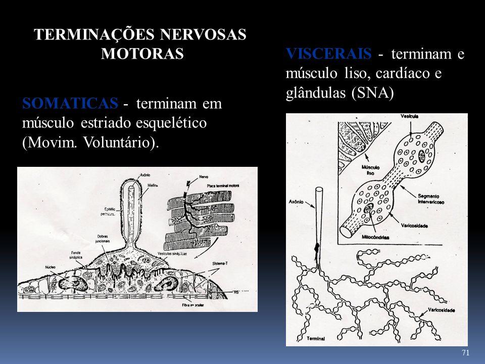 TERMINAÇÕES NERVOSASMOTORAS. VISCERAIS - terminam e músculo liso, cardíaco e glândulas (SNA)