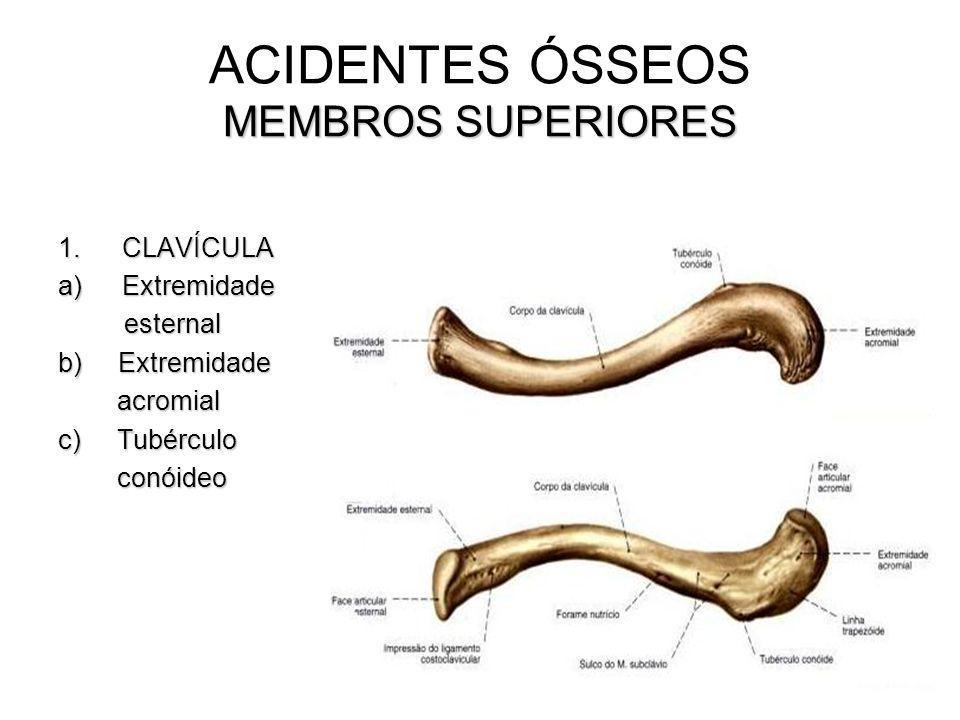 ACIDENTES ÓSSEOS MEMBROS SUPERIORES