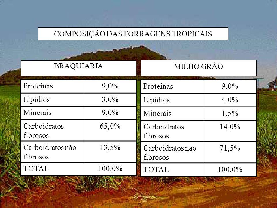 COMPOSIÇÃO DAS FORRAGENS TROPICAIS