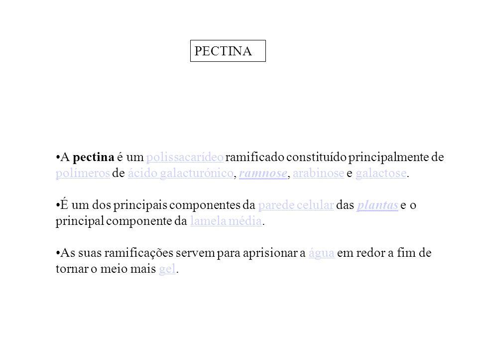 PECTINA A pectina é um polissacarídeo ramificado constituído principalmente de polímeros de ácido galacturónico, ramnose, arabinose e galactose.