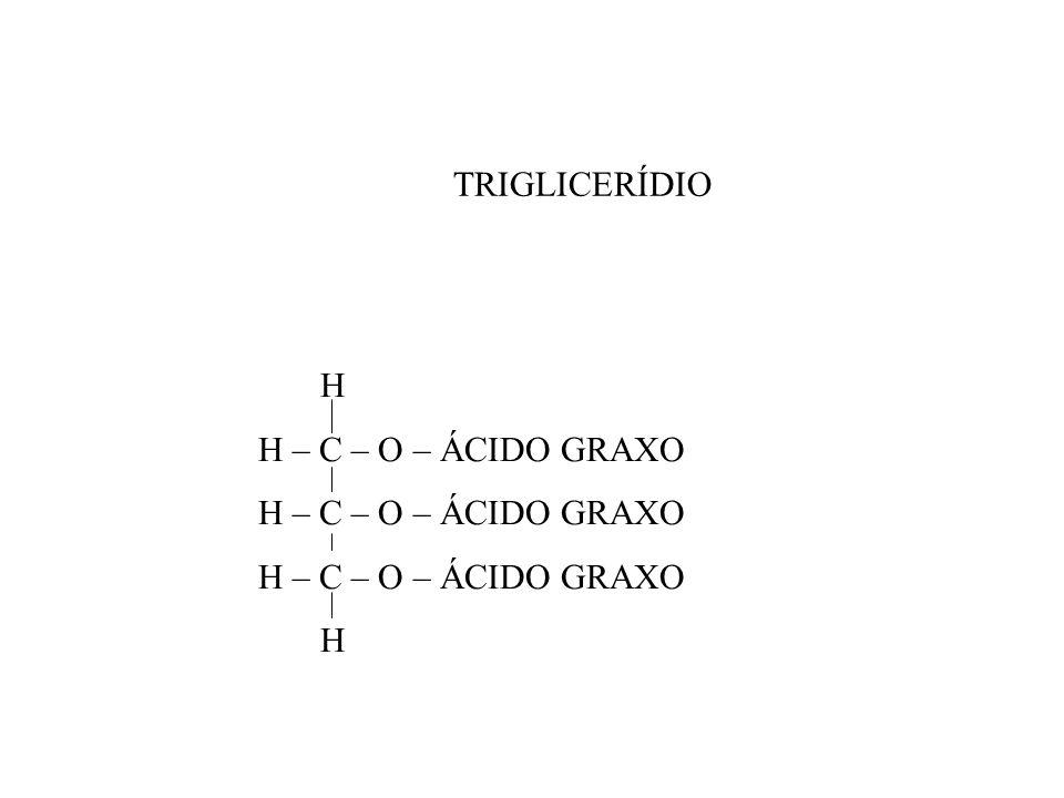 TRIGLICERÍDIO H H – C – O – ÁCIDO GRAXO