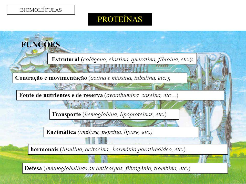 BIOMOLÉCULAS PROTEÍNAS. FUNÇÕES. Estrutural (colágeno, elastina, queratina, fibroina, etc.);