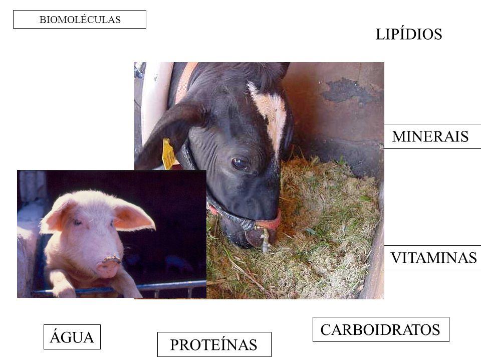 BIOMOLÉCULAS LIPÍDIOS MINERAIS VITAMINAS CARBOIDRATOS ÁGUA PROTEÍNAS