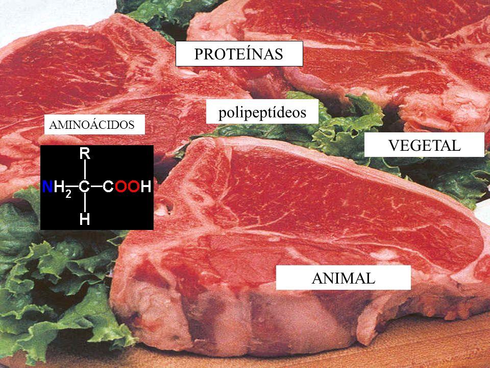 PROTEÍNAS polipeptídeos AMINOÁCIDOS VEGETAL ANIMAL