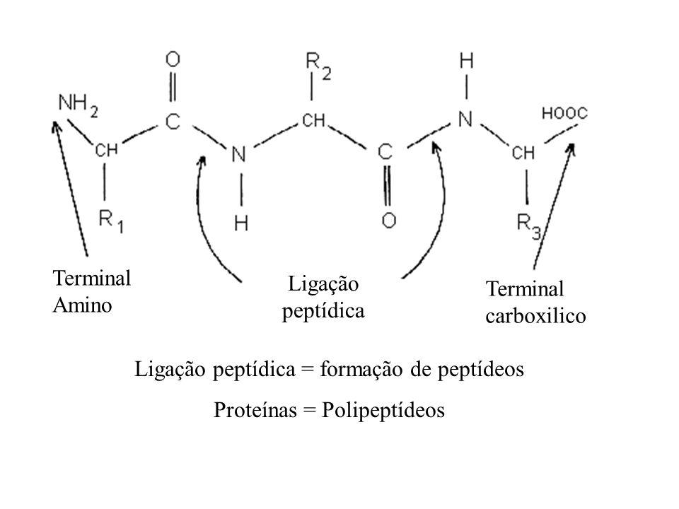 Ligação peptídica = formação de peptídeos Proteínas = Polipeptídeos