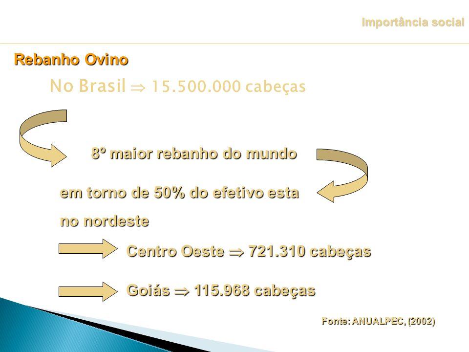 No Brasil  15.500.000 cabeças Rebanho Ovino 8º maior rebanho do mundo