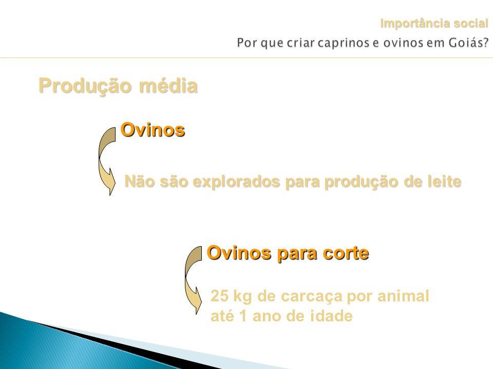 Por que criar caprinos e ovinos em Goiás