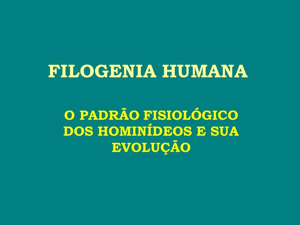 O PADRÃO FISIOLÓGICO DOS HOMINÍDEOS E SUA EVOLUÇÃO